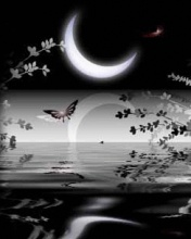 programas y cosas para celulares Beautiful_night-7514c8