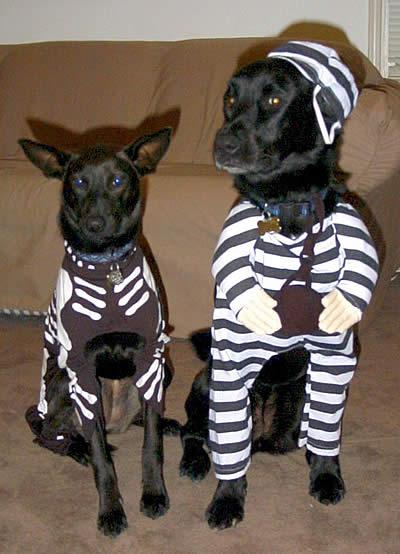 Trucos para evitar que se escape tu perro