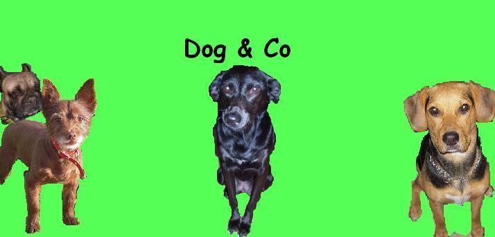 Dog & Compagnie Index du Forum