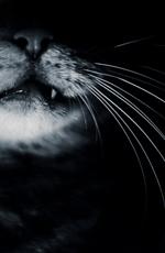 Damocles Seven Cat-103b616
